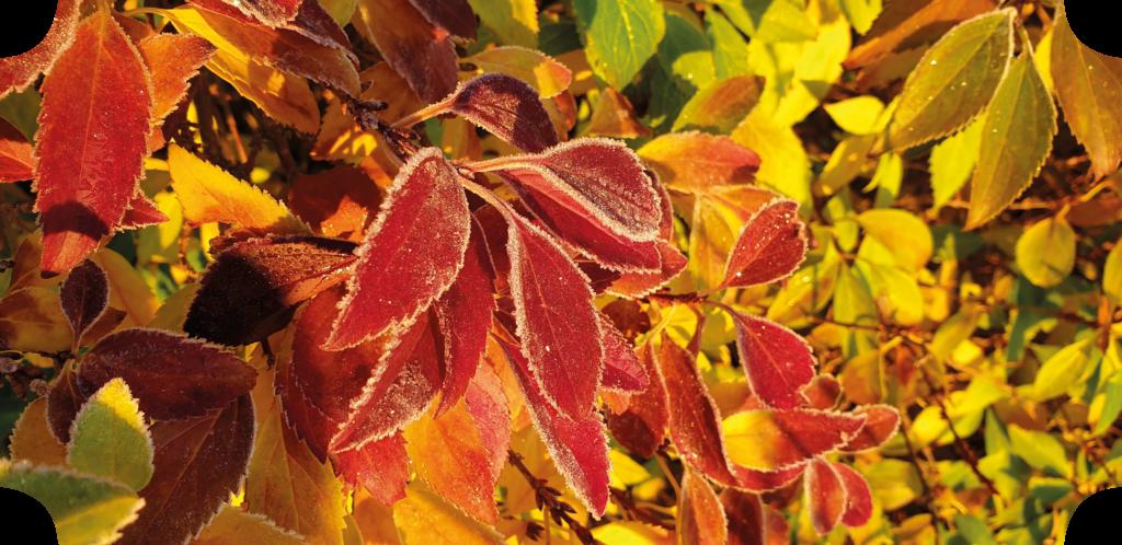 skön träning på hösten